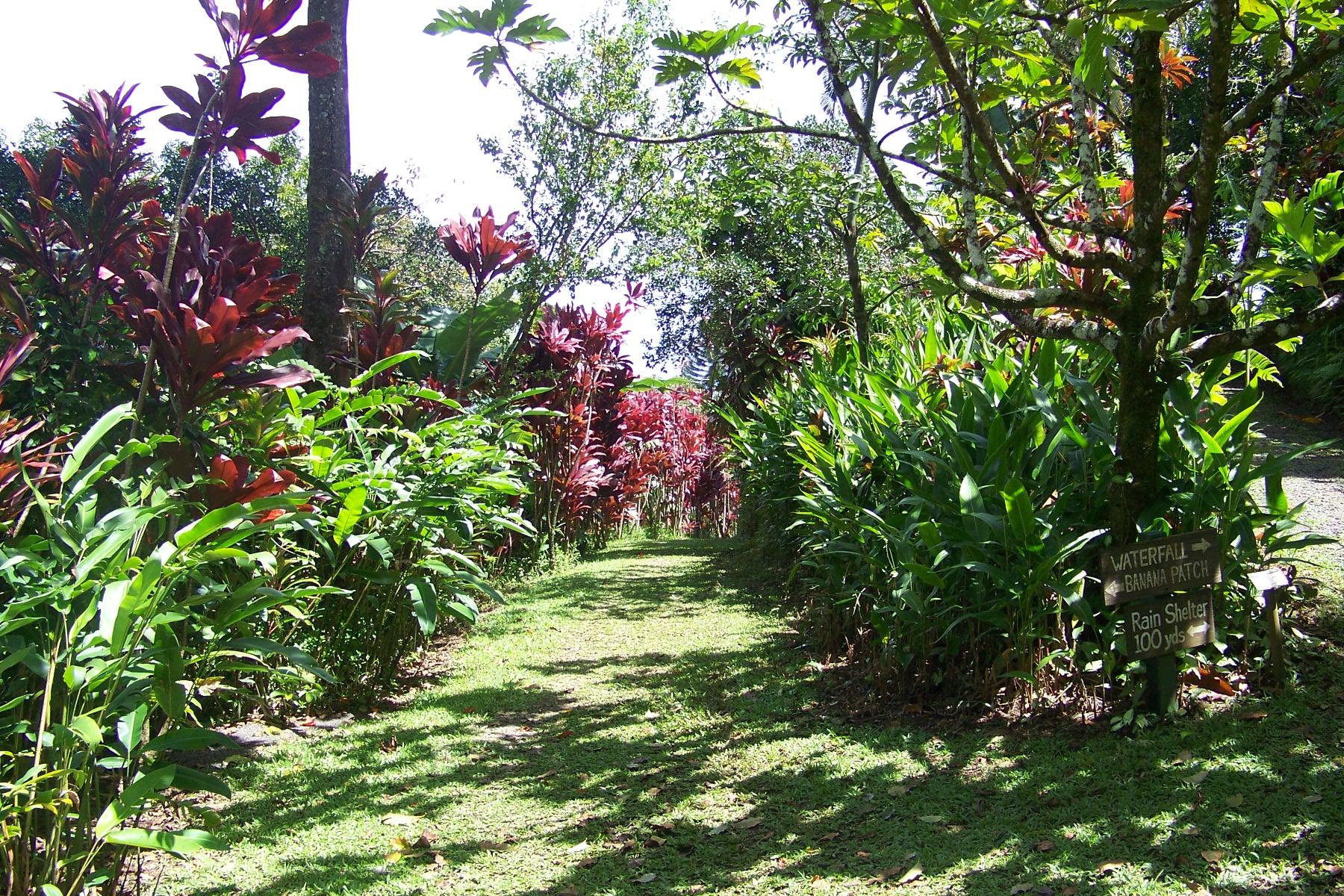 maui garden of eden arboretum